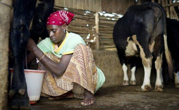 Increasing Milk Production