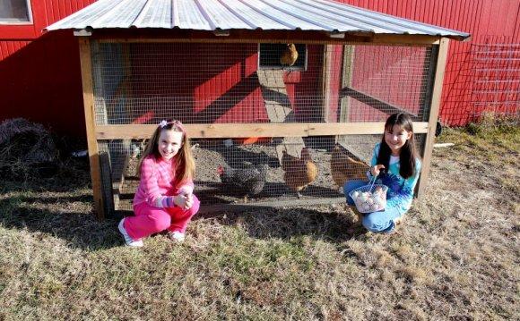 Anna s Chickens