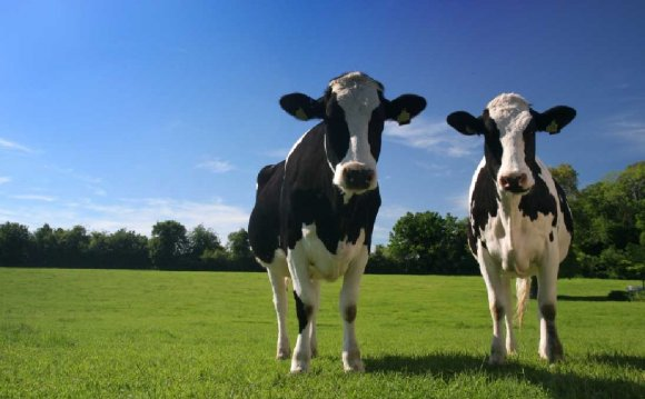 Global Dairy Cow Milk