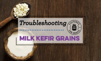 Milk Kefir Grains Troubleshooting FAQ | Milk Kefir Expert Advice | Cultures for Health