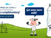Cow milk Products list
