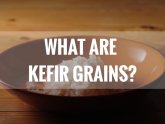 What are kefir grains?