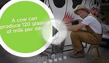 A cow can produce 120 glasses of milk per day. #MuseumsExplain