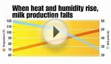 Fight Heat Stress in Dairy Cows | Maintain Milk Production