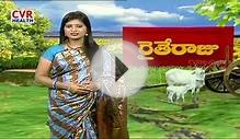 How to increase Milk Production in Dairy Cows | Raithe Raju