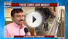MUSICAL COW MILK PRODUCTION!!