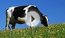 The Benefits of Raw Milk - Natural Foods Diet