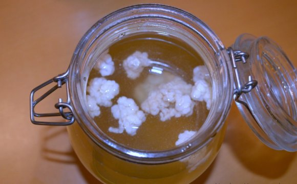 Make kefir grains
